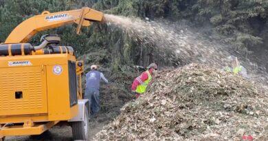 Garantiza Toluca que los árboles naturales de navidad recolectados vuelvan a la tierra